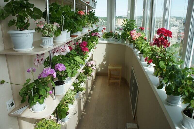 Цветы на балконе с тонированными стеклами