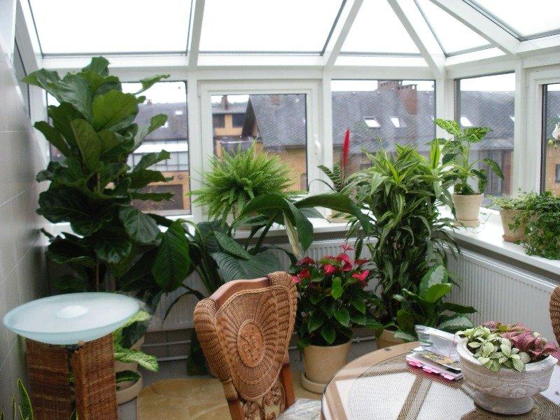 for Plantas de balcon para todo el ano