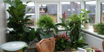 Летний сад на балконе